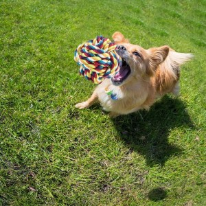 Pet Dog Rope Toy Set